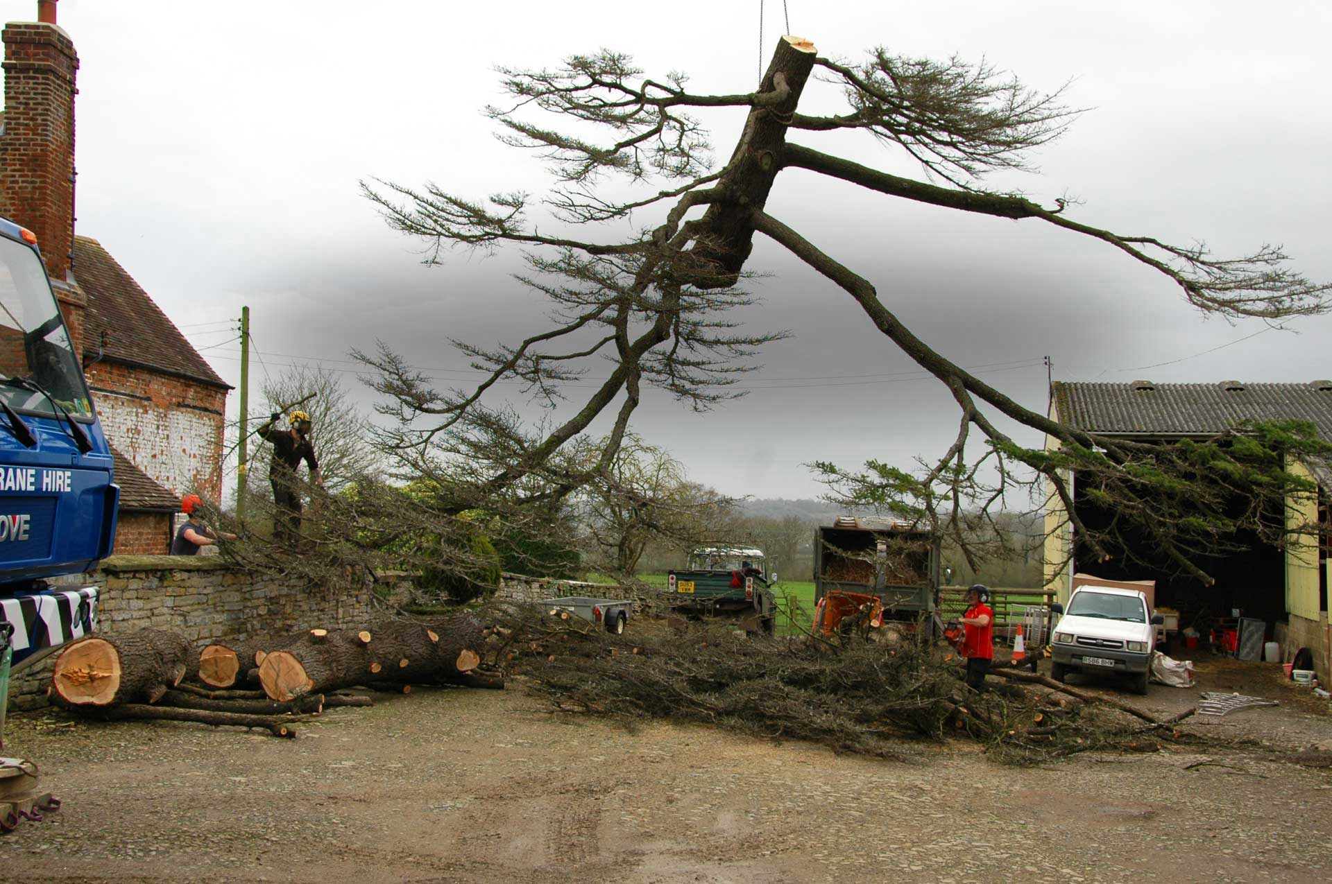 Hope Tree Services