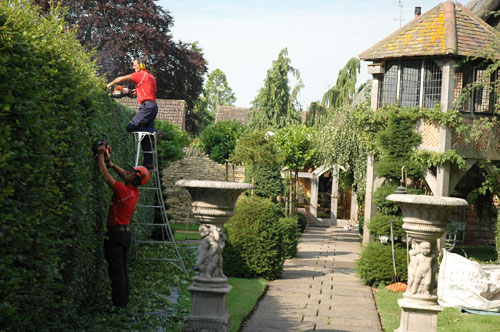 hedge trimming laying